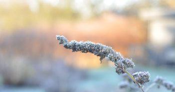 Sommerfuglens frøstand om vinteren
