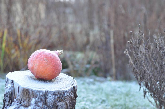 En træstub om vinteren
