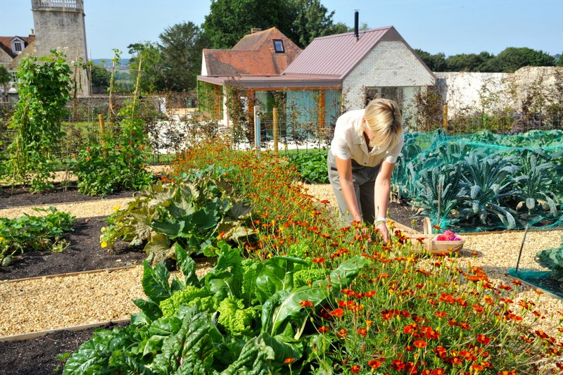 gardening in beds of the walled garden, The Long House, Padmore