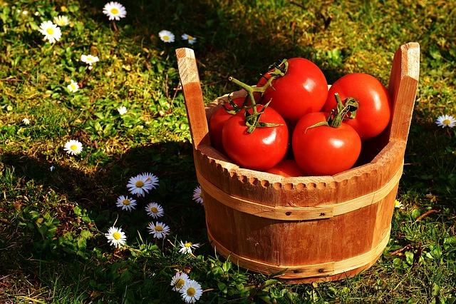 Tomatenduenger zum tomaten duengen in deutschland
