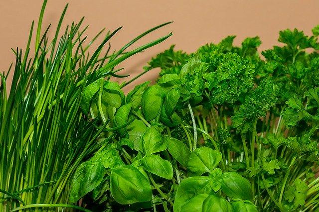 Blumentopf Bewässerungssystem - Ein selbstbewässernder Kräutertopf