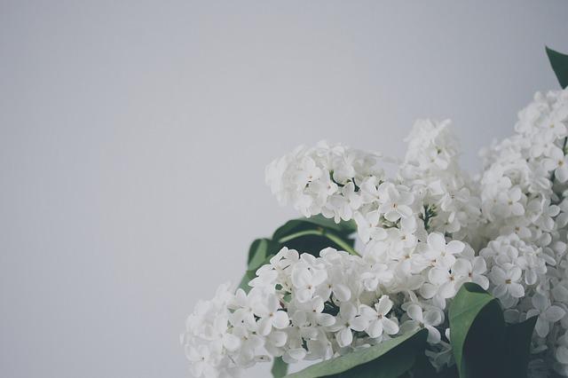 Pflanztröge