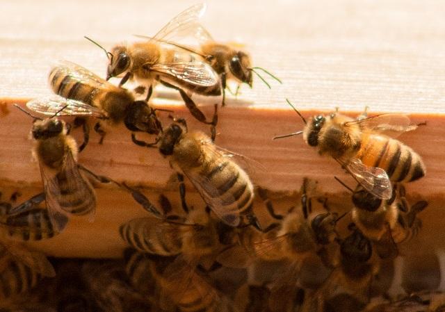 Bienen helfen mit einer Patenschaft für Bienen abschließen