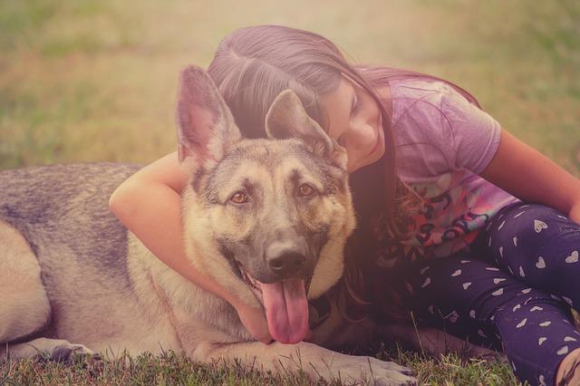 Omega 3 Lachsöl für Hunde