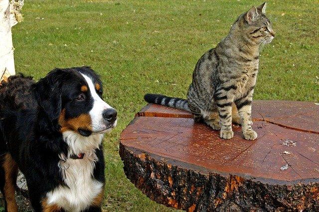 GPS-Tracker für den Hund