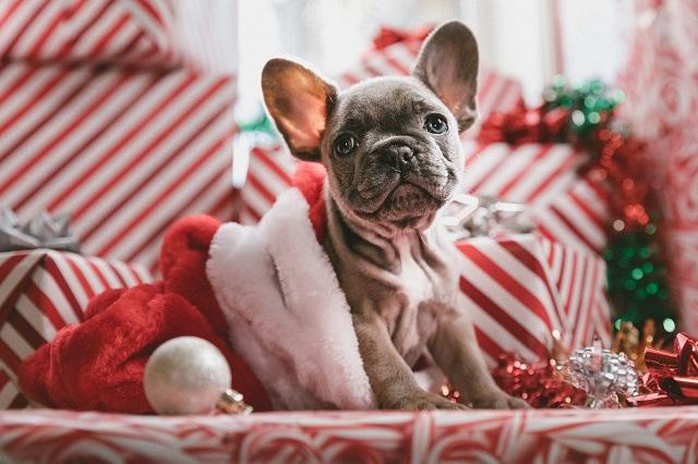 Adventskalender für Hunde