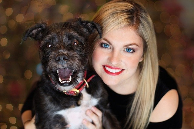 Die schönsten Adventskalender für Hunde und Haustiere