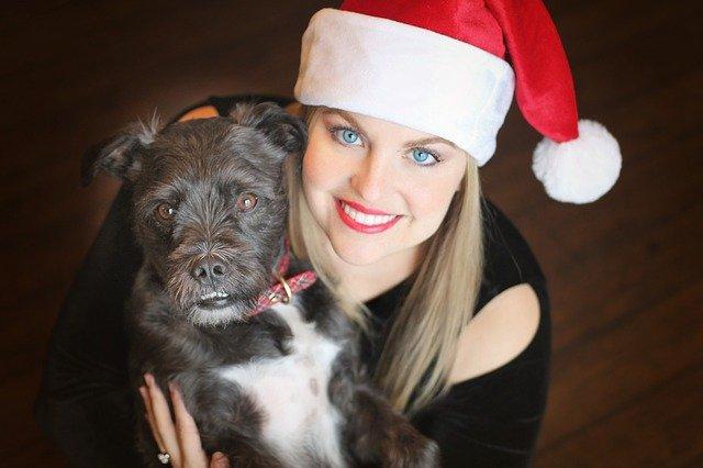 Hunde Adventskalender mit Leckerlies