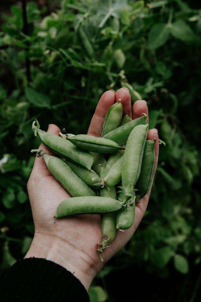 Gardening, nature & fresh berries
