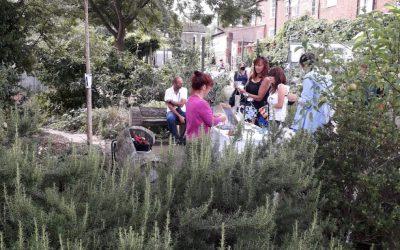 Grapes Hill Community Garden – Ellen Mary and Jo Rice