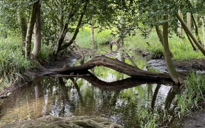 Hidden Gems: Oxburgh Hall – Lauren Lonergan