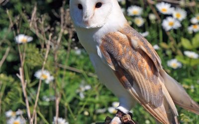 Hidden Gems: Pensthorpe Natural Park – Lauren Lonergan