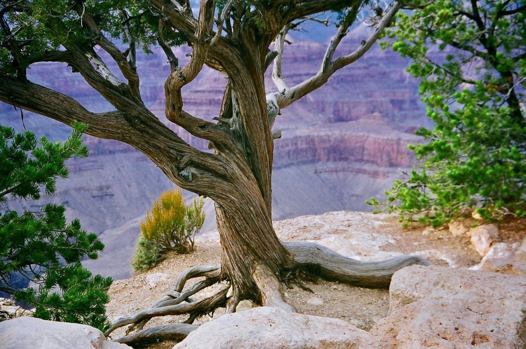 Grand Canyon Canyon Valley Cliff  - NWimagesbySabrinaEickhoff / Pixabay