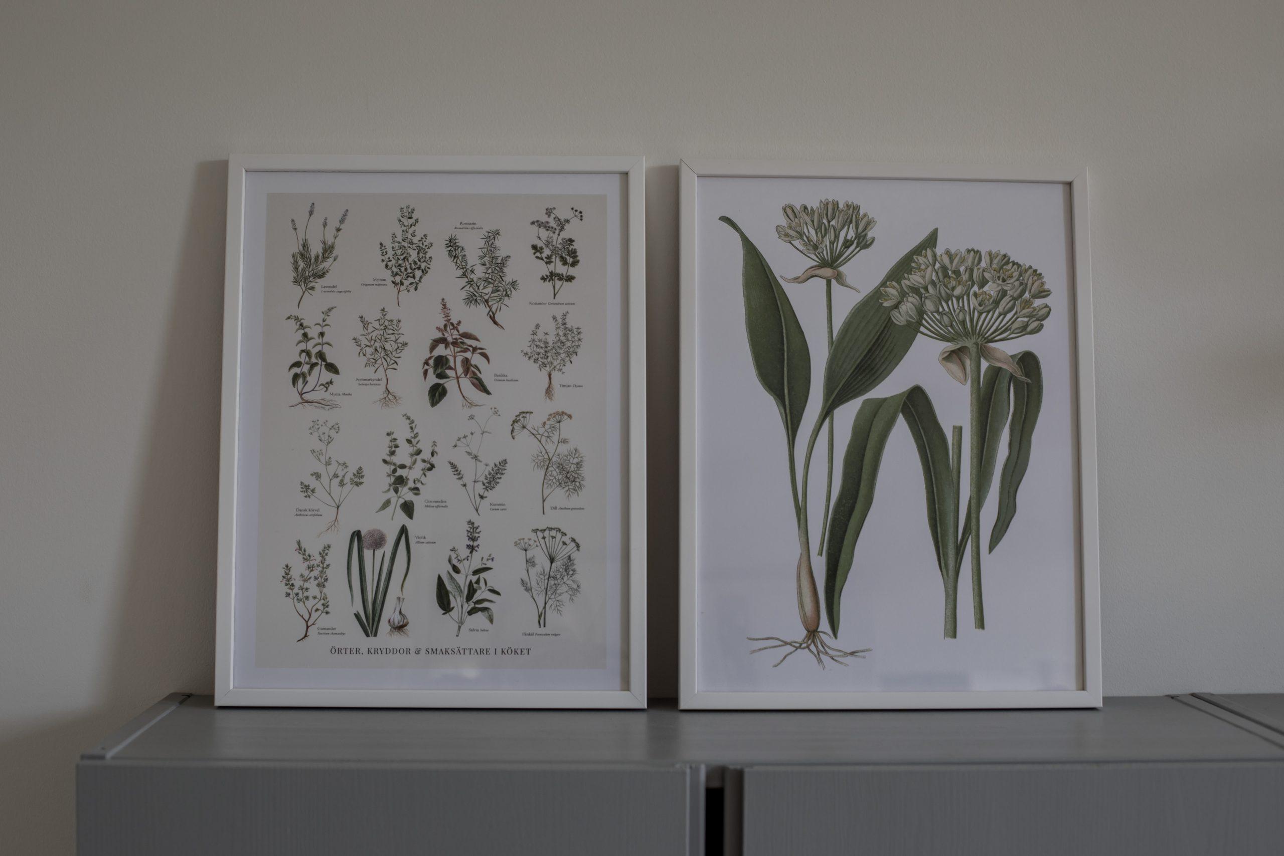 botaniska posters