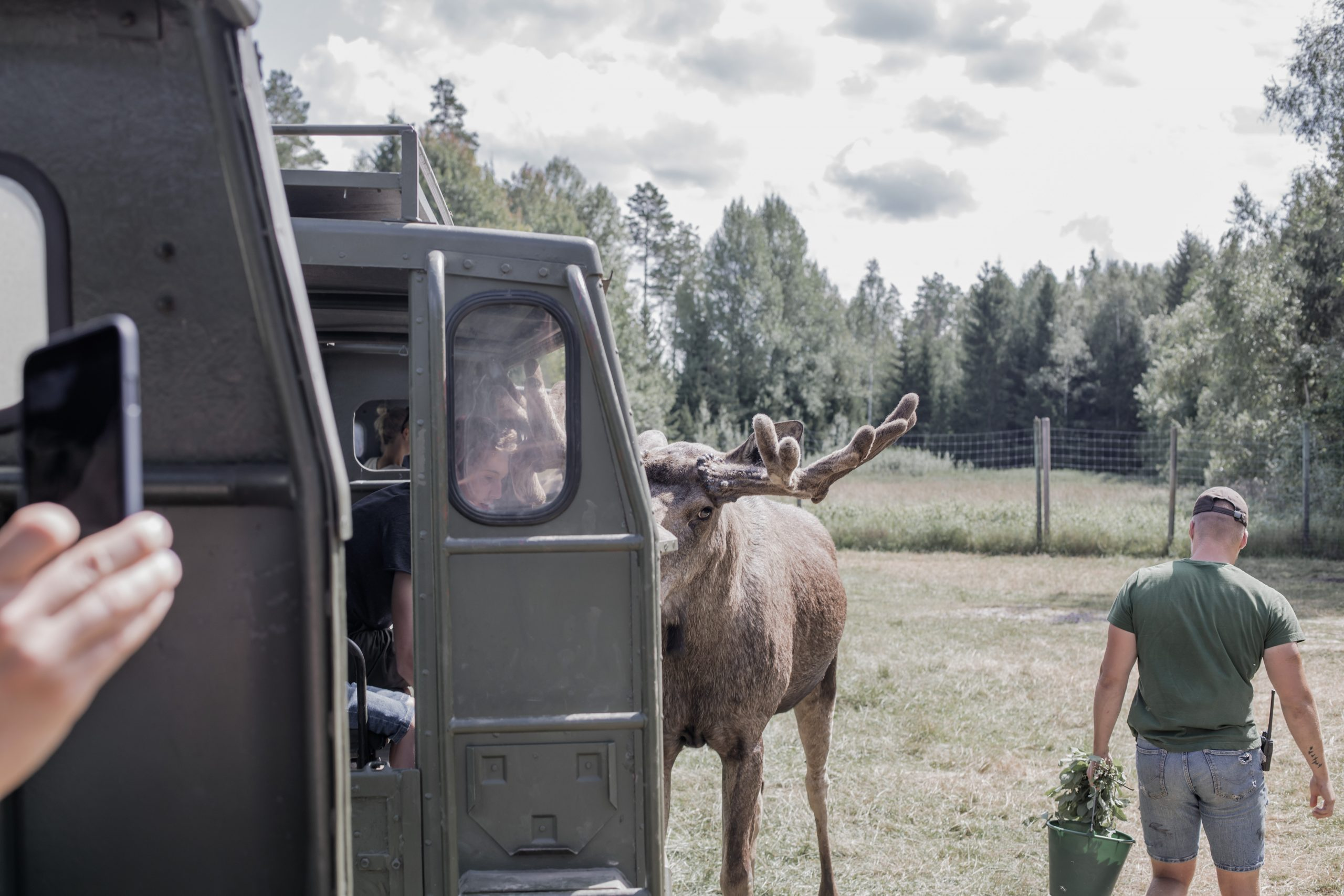 Älgsafari