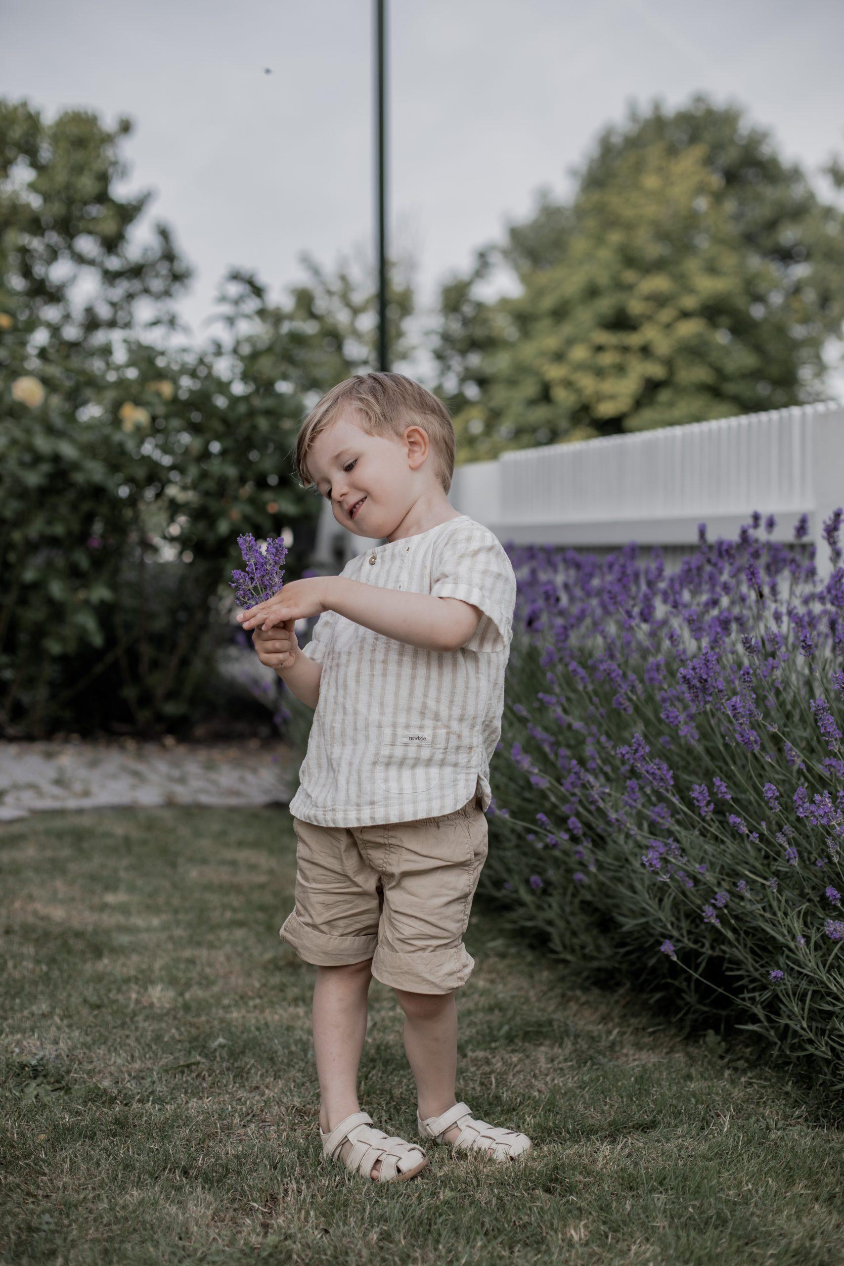 Lavendelhäck
