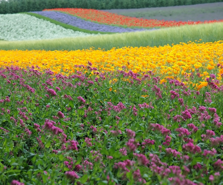 Multizone flowering fields