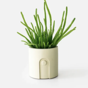 Modern neutral boho planter with small green plant