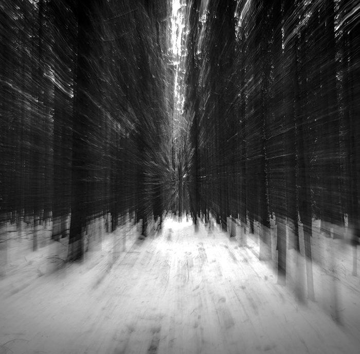 Att fotografera träd
