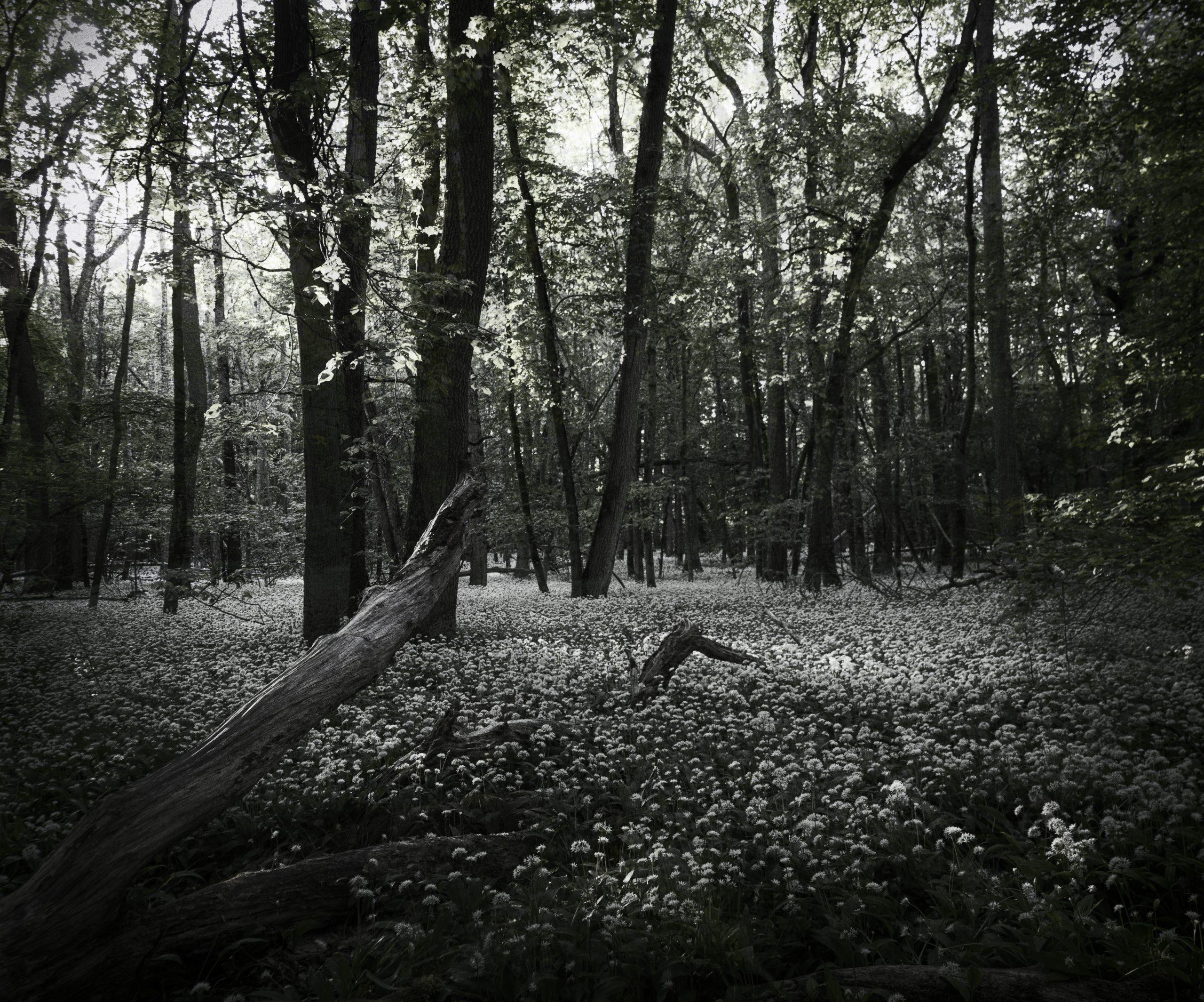 Närvarande Fotografering