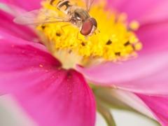 blommor-27