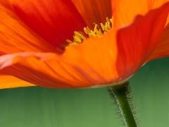 blommor-3