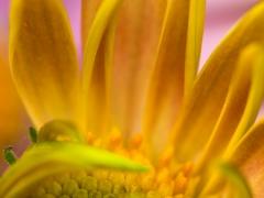 blommor-6