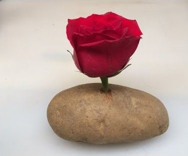 Rose Potato