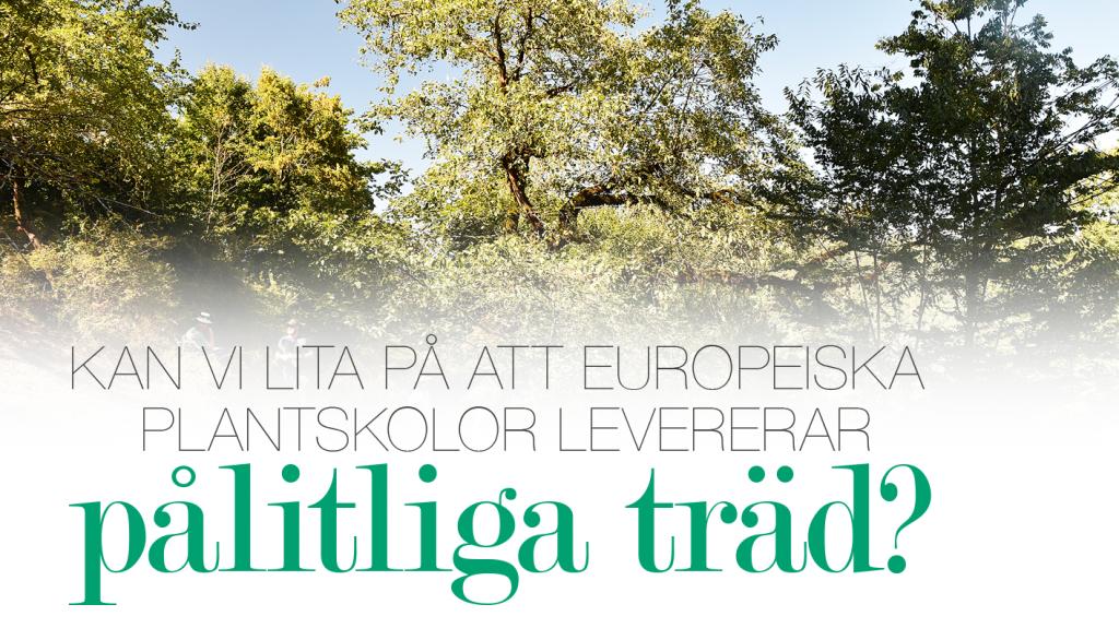 Kan vi lita på att europeiska plantskolor levererar pålitliga träd?