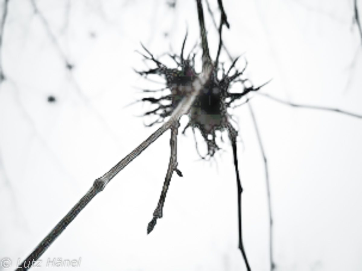 Bäume slnd seht Intreante Fotoopjektte.
