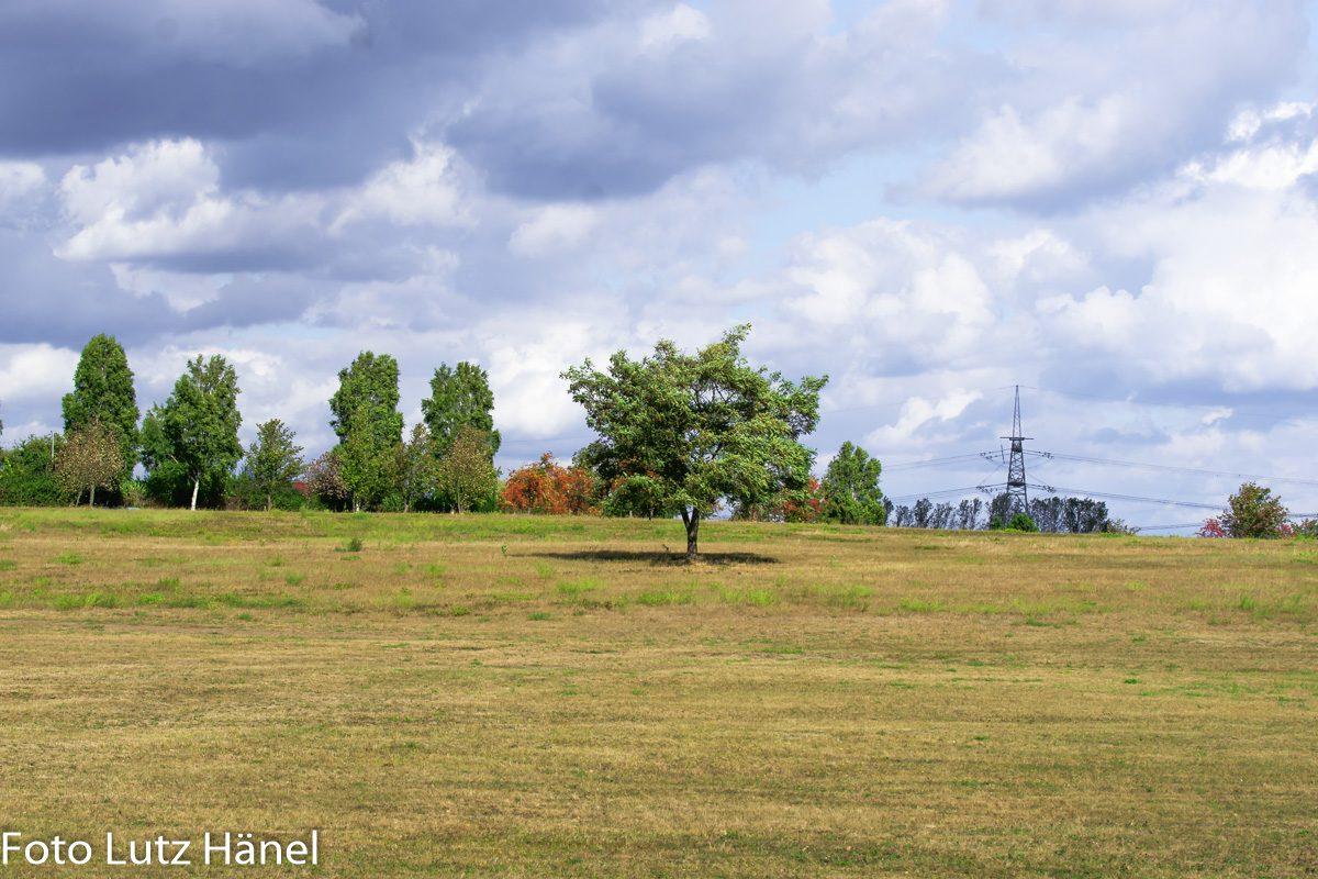 Riesige Herbstloiche Wiese vor dem Beweidungsprpjekt!