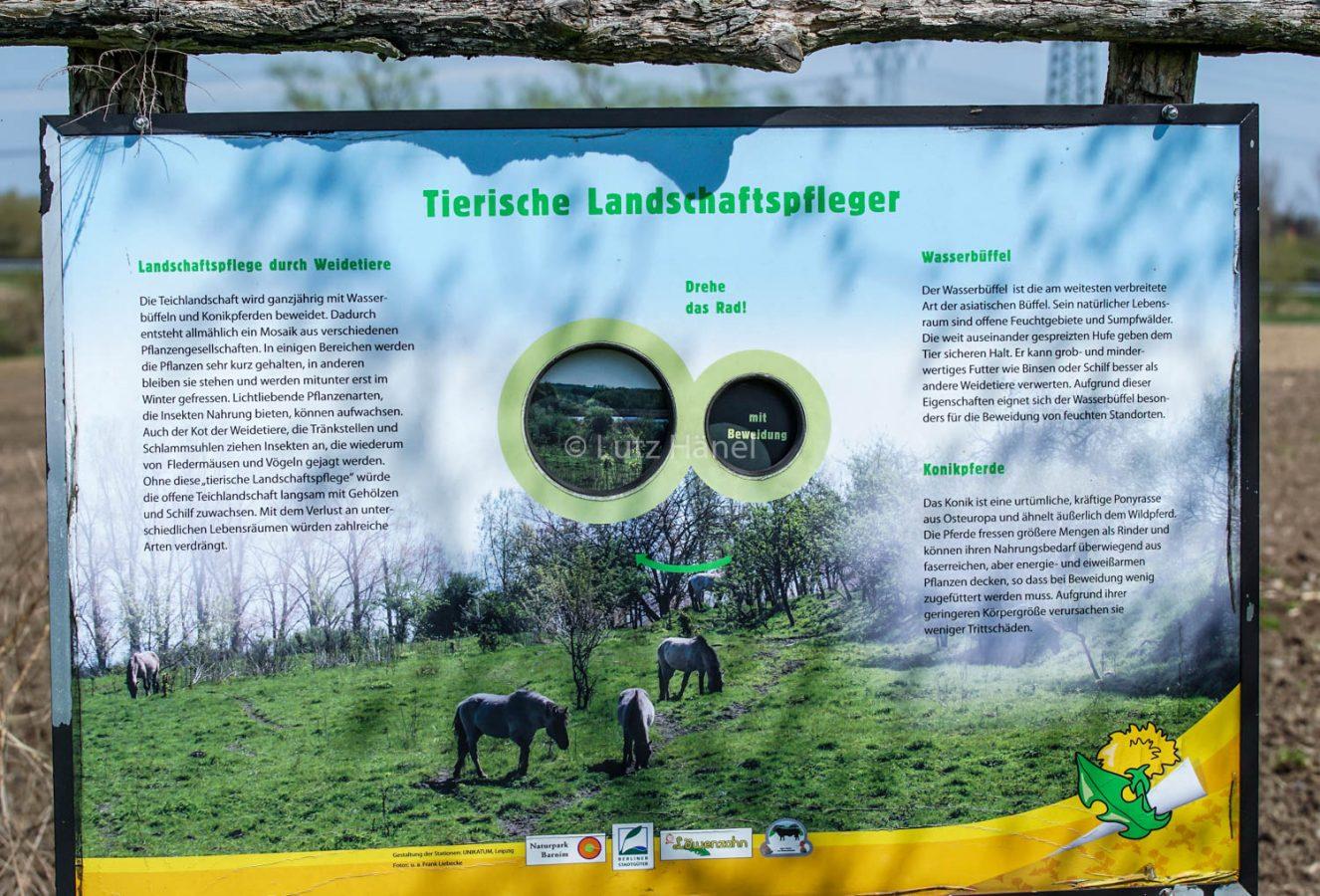 Lehrpfadtafel Tierische Landschaftspfleger im Mühlenbecker Land.