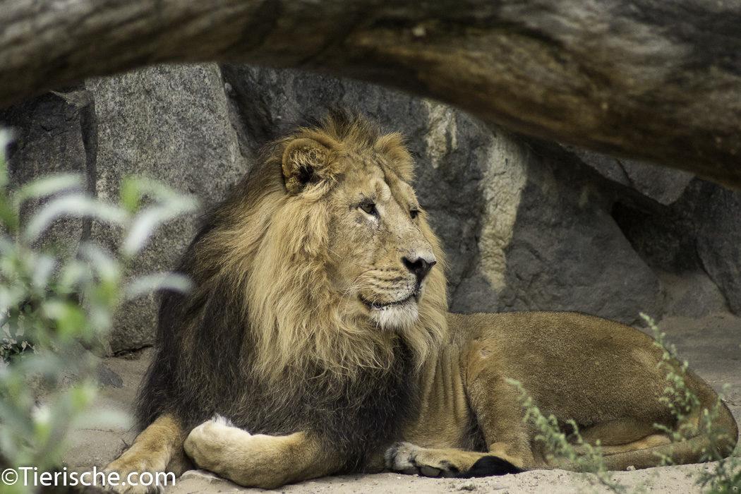 König der Tierwelt Fotos aus dem Tierpark Berlin