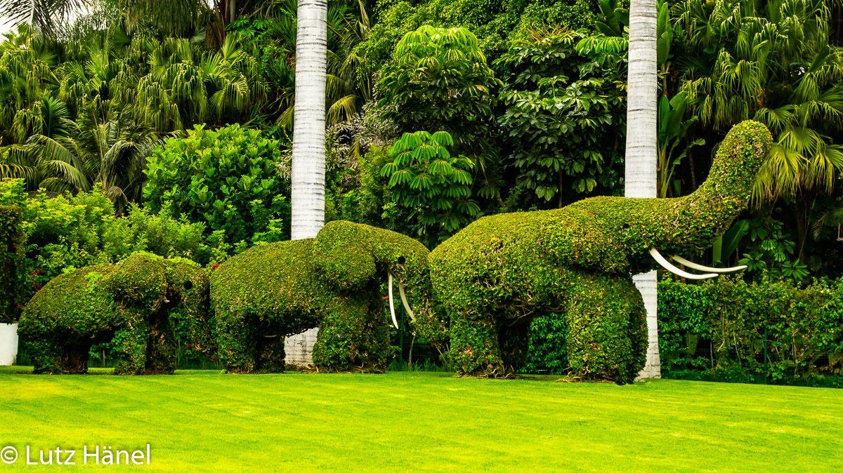 Foto von Klima Neutralen Elefanten.