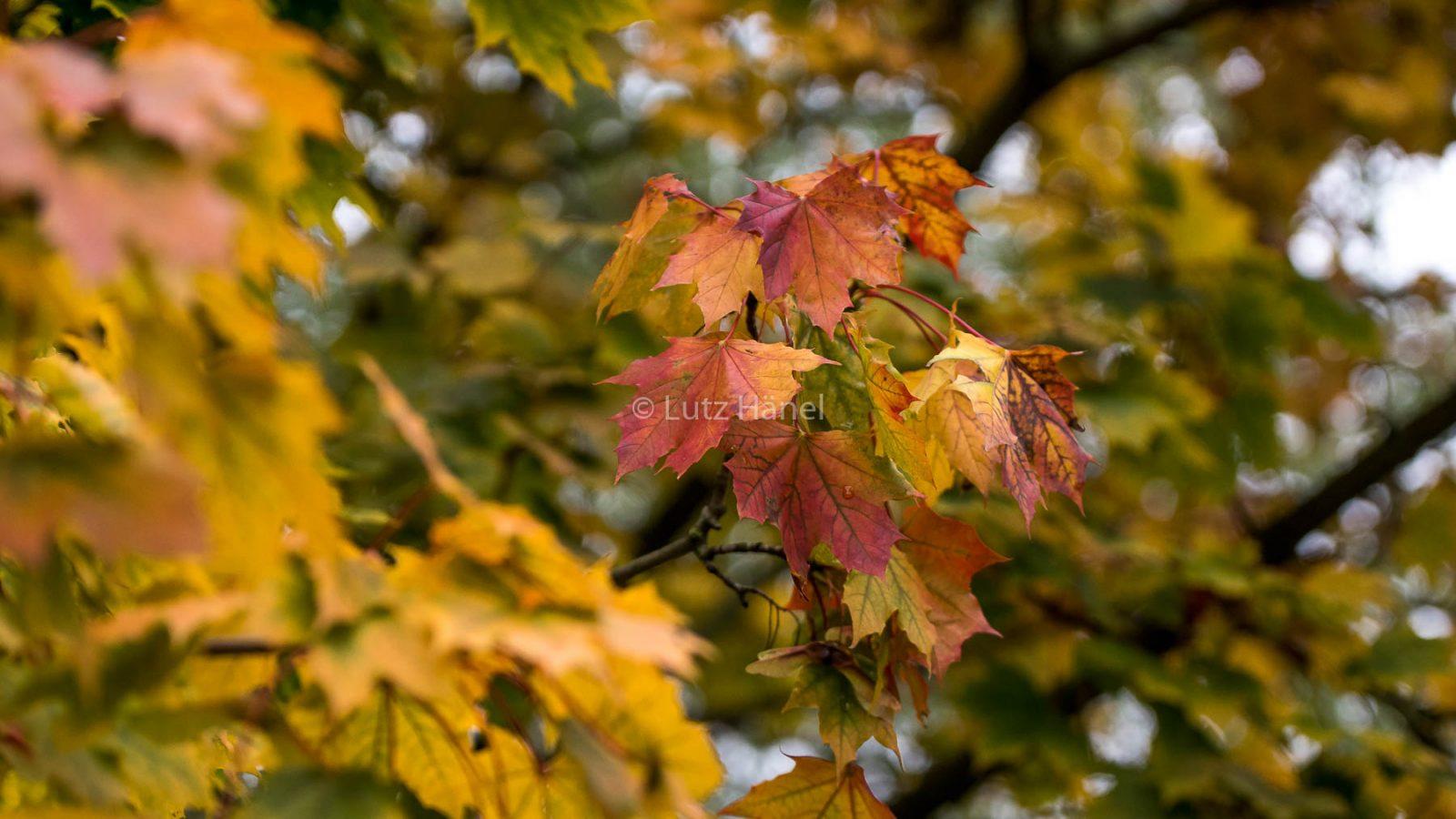 Jedes Jahr von neuen im Herbst kann man sich an den Herbstfarben erfreuen.