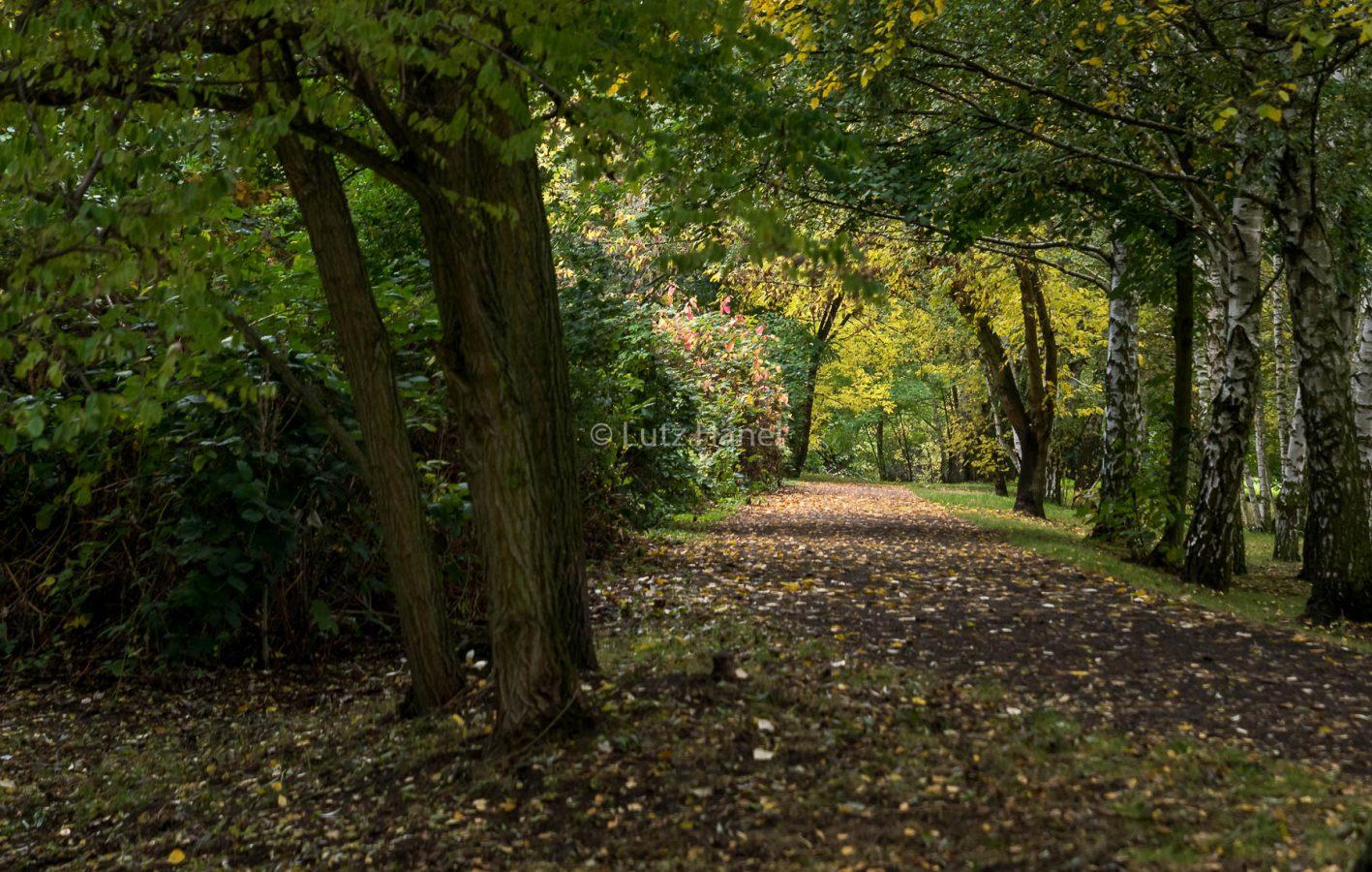 am Mauerweg gibt es einen Bereich wo kleines Birkenwädchen gibt.