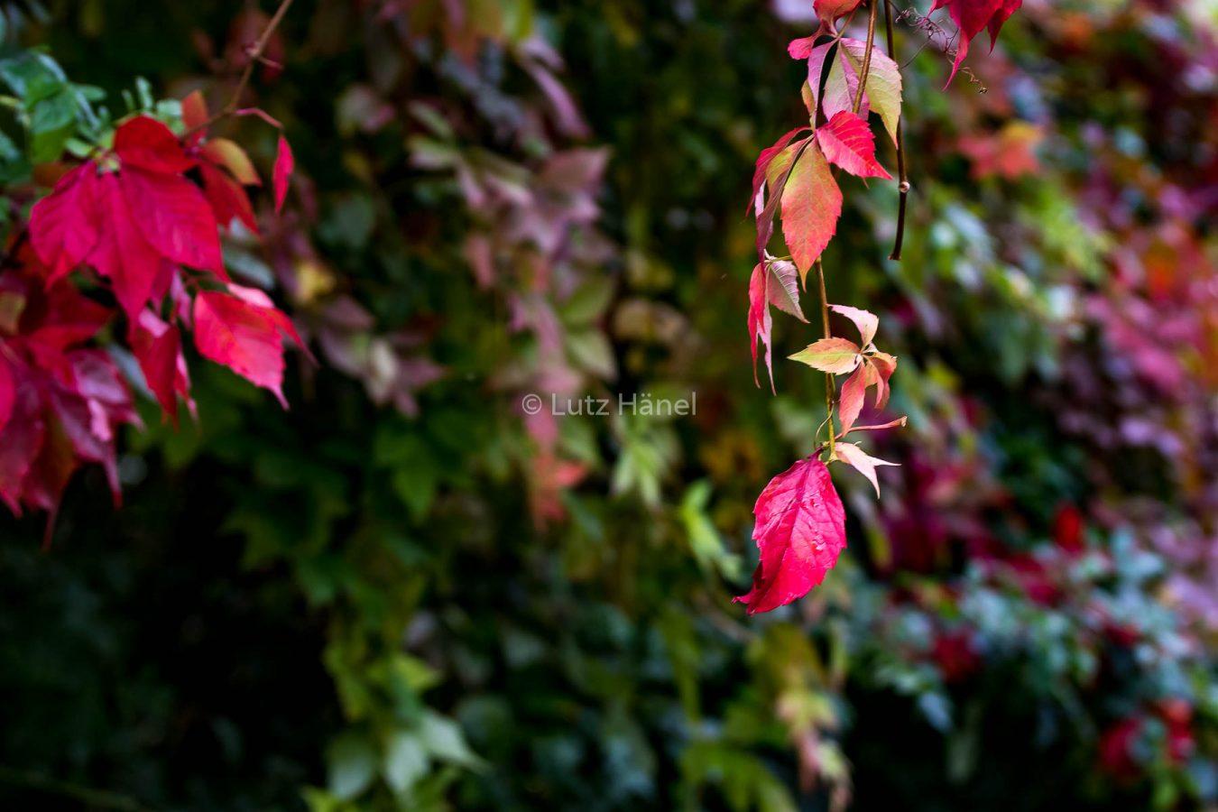Leuchtene Herbstfarben