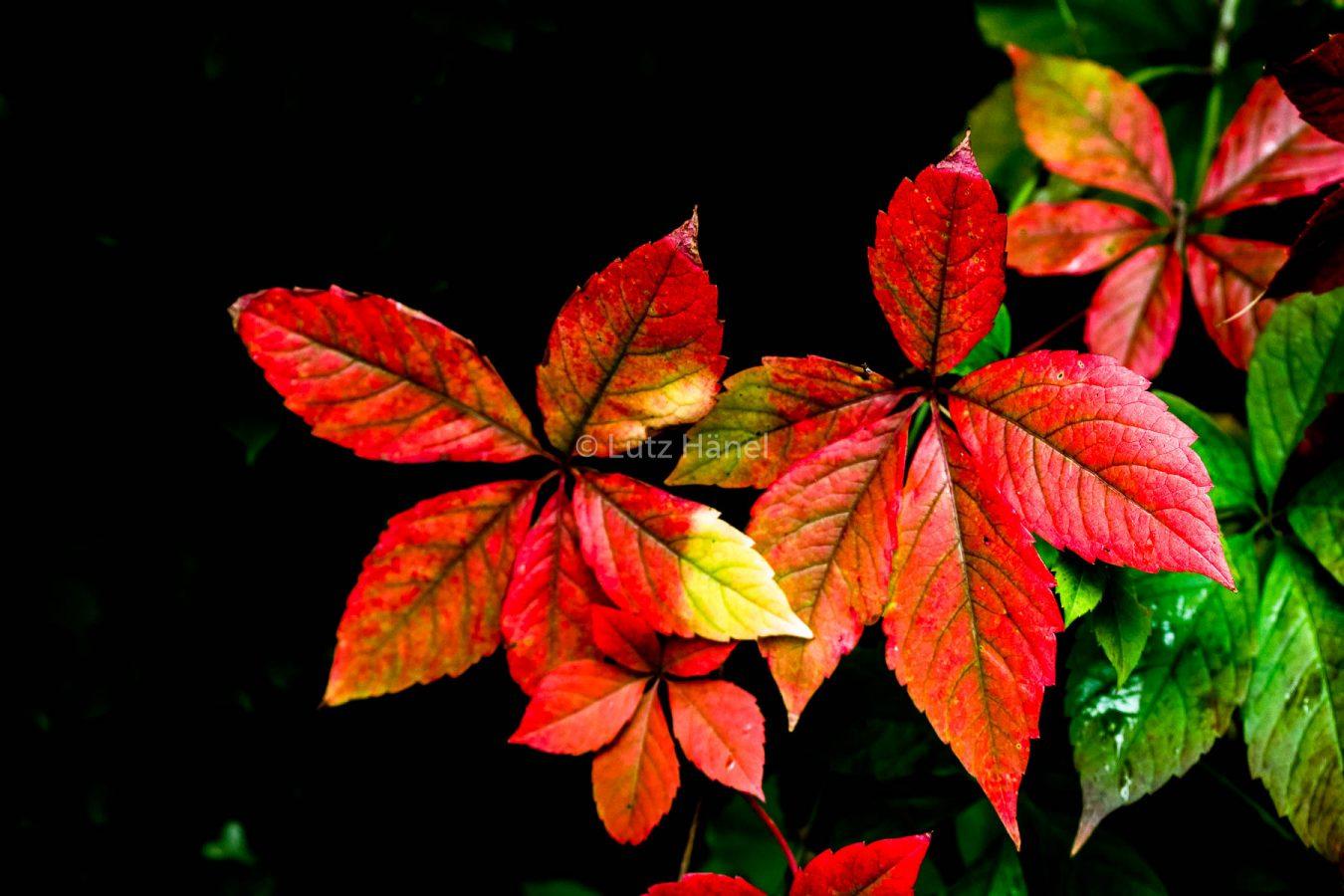 Herbst beginn wird sichtbar