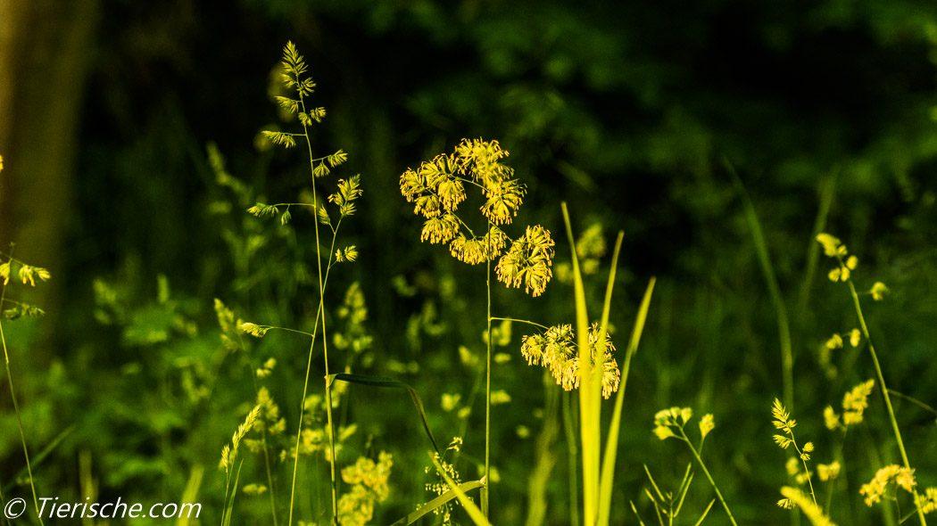 am Mauerweg gedeien Trockenwiesen die auch mit Trockemheit gut zu recht kommen.