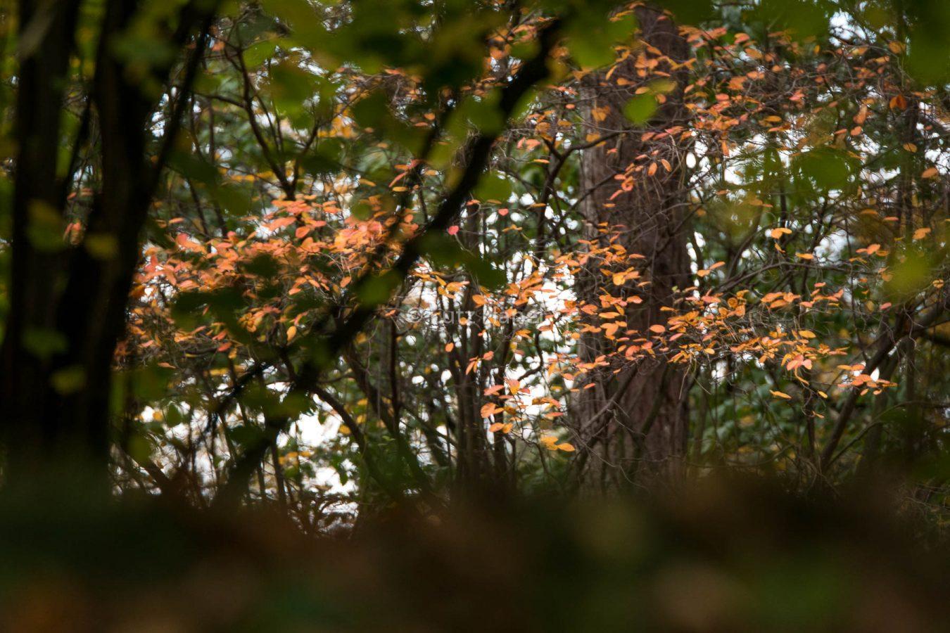 Der Herbst erstrahlt im Britzer Garten.