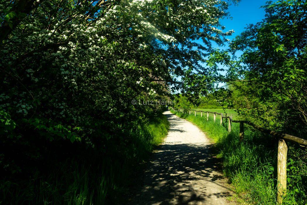 Weg an der Wiesen Landschaft laden einen ein zum Wandern in dem tollen im Naturschutz Gebiet Karower Teiche.