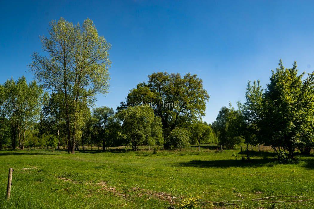 Naturschutz Gebiet Karower Teiche mit Wiesen Landschaft umgeben von herrlichen Bäumen.