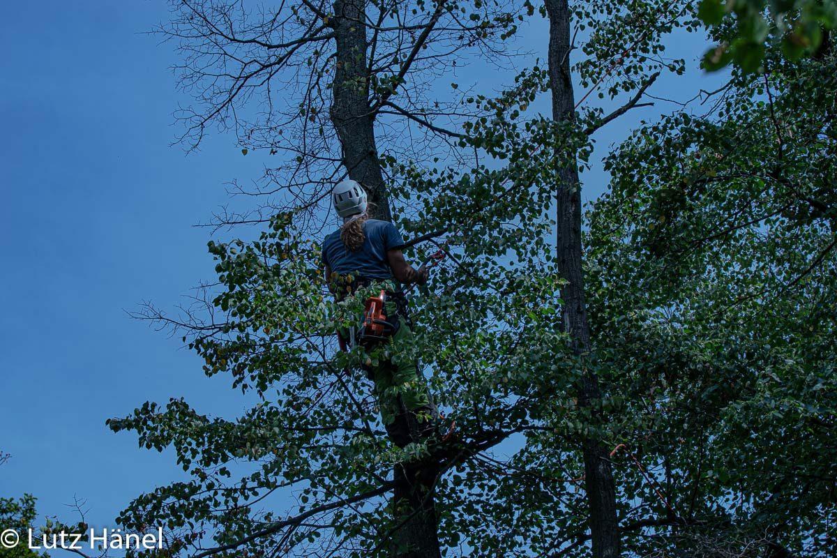 Baumpfleger im Baum
