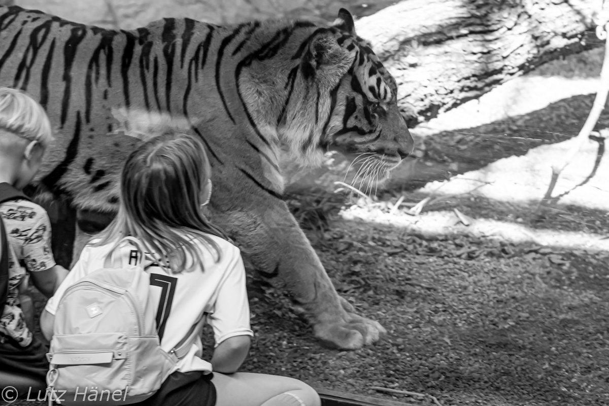 Foto vom im Alfred-Brehm-Haus umgestalte Tiger Anlage.