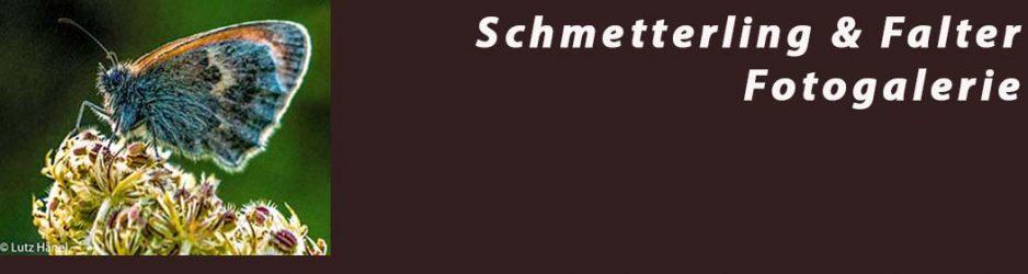 Schmetterling & Falter - Fotogalerie