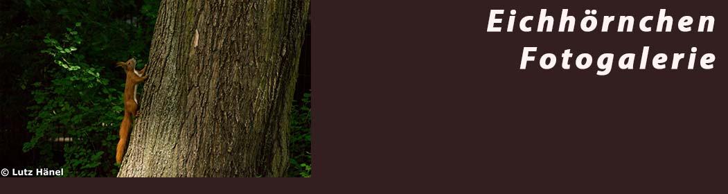 Eichhörnchen - Fotogalerie