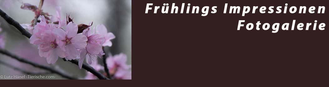 Frühlings Impressionen - Fotogalerie