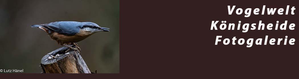 Vogelwelt in der Königsheide - Fotogalerie