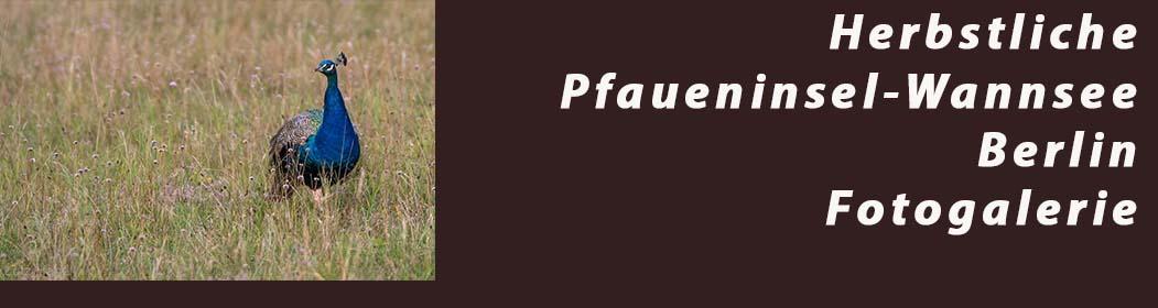 Herbstliche Pfaueninsel - Fotogalerie