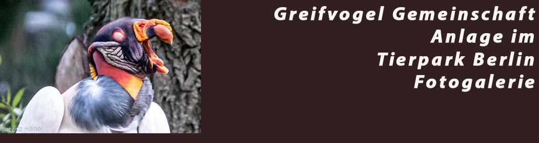 Greifvogel Gemeinschaft Anlage im Tierpark Berlin - Fotogalerie